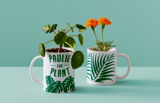 Mugs plantes
