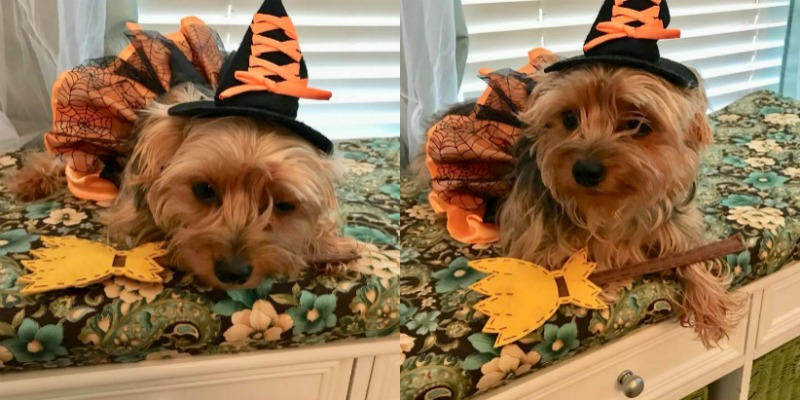 Halloween Pet Costume Ideas